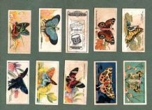 Cigarette cards set Butterflies Girls W/ butterfly wings